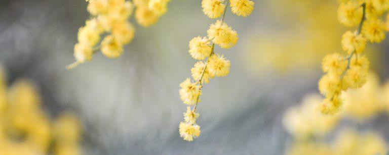 น้ำหอมกลิ่นโทนดอกไม้